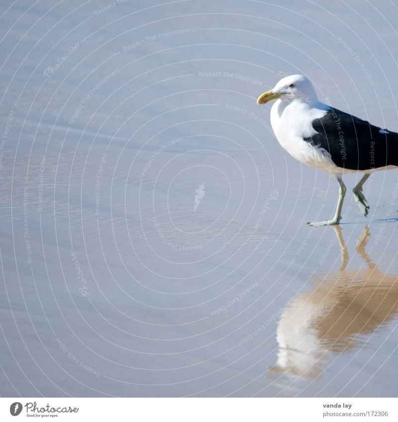 Jeder braucht eine Möwe in seinem Portfolio weiß Meer Sommer Strand Ferien & Urlaub & Reisen schwarz Tier Sand Vogel Küste laufen Spaziergang Wildtier Seeufer