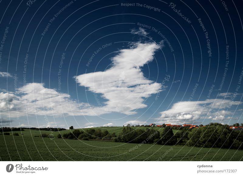 Wolkenbilder Himmel Natur schön Baum Sommer Ferne Leben Wiese Freiheit Landschaft Umwelt Gras Bewegung träumen Feld