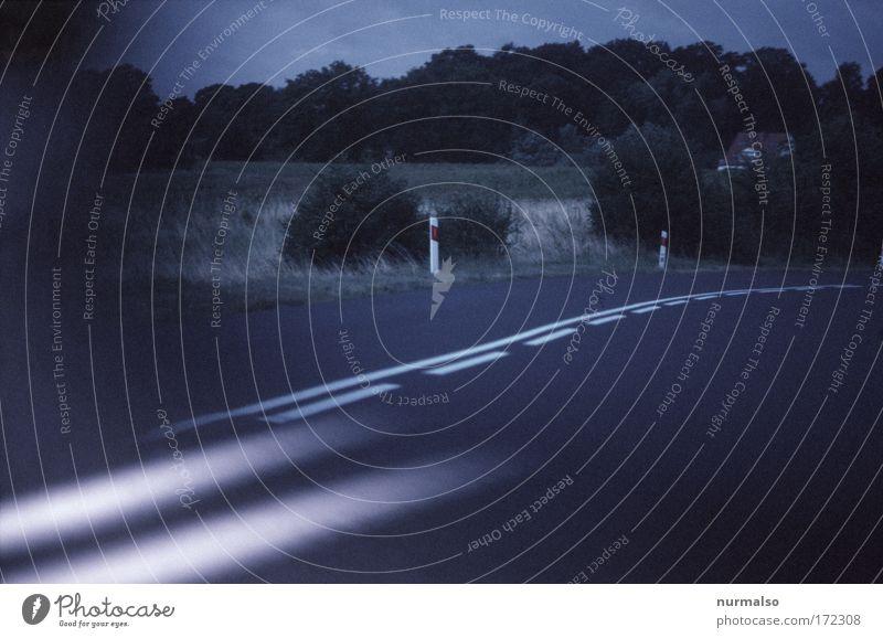 Rücksicht. Baum Pflanze Ferien & Urlaub & Reisen Freude Tier Straße Landschaft Gras Bewegung Linie Verkehr Geschwindigkeit gefährlich Sträucher fahren Spiegel