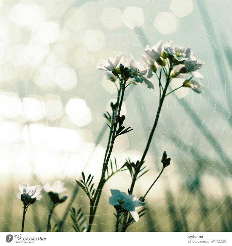 Im Sonnenschein Natur Wasser schön Blume Pflanze Leben Erholung Gefühle Bewegung Freiheit Glück träumen Zufriedenheit Gesundheit Umwelt ästhetisch