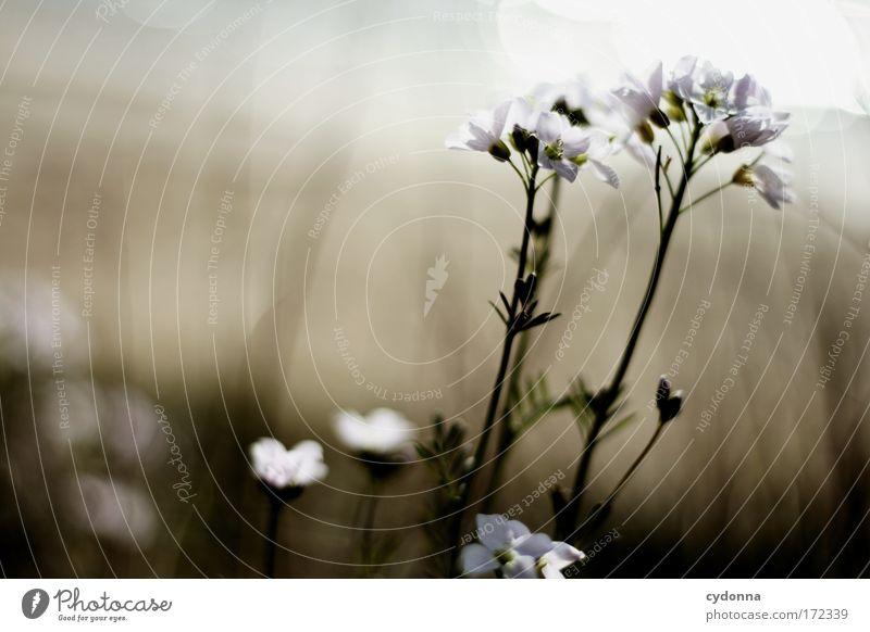 Wind und Sonne Natur Wasser schön Blume Pflanze ruhig Leben Gefühle Blüte Bewegung Freiheit Glück träumen Wärme Umwelt