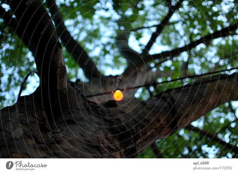Licht an Natur Himmel Baum grün rot Park Umwelt stehen leuchten Freundlichkeit stagnierend selbstbewußt