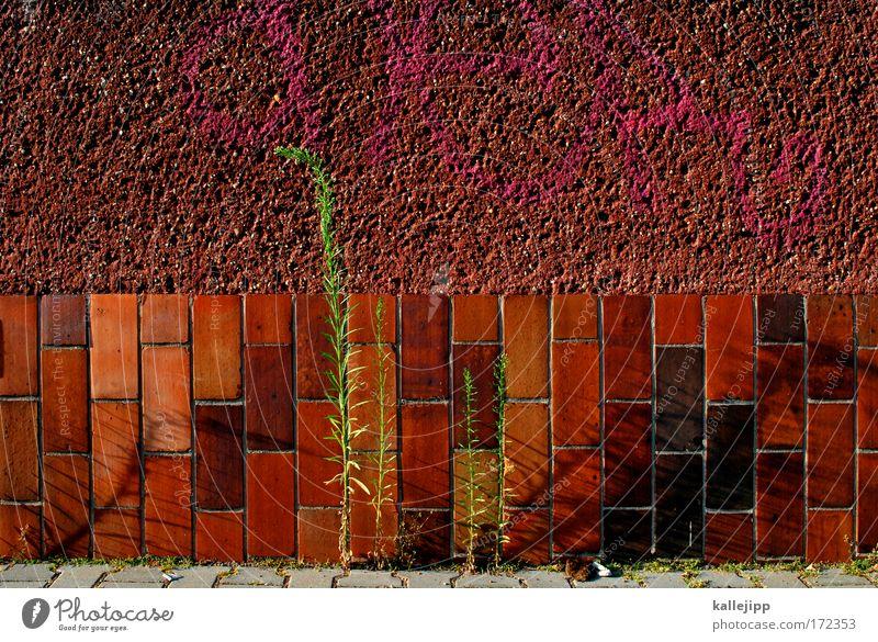 resistent Natur Pflanze rot Blatt Haus Wand Umwelt Freiheit Gras Mauer Fassade Wachstum Backstein Moos kämpfen saftig