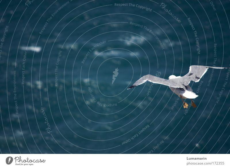Sieben Meere (II) Natur Wasser blau weiß Ferien & Urlaub & Reisen Tier Ferne Umwelt Freiheit Wege & Pfade Wellen Vogel fliegen frei Luftverkehr