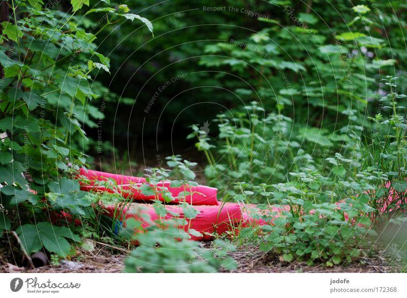 schlafstätte Natur Pflanze grün rot Wald Umwelt Gras gehen Erde Sträucher leer Armut schlafen Müll Umweltverschmutzung Grünpflanze