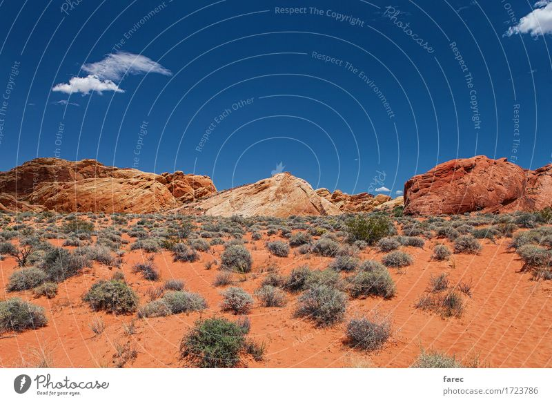 desert valley of fire Himmel Natur Ferien & Urlaub & Reisen Pflanze Sommer Sonne Landschaft Ferne Umwelt gelb Gras Freiheit Sand Felsen orange Tourismus
