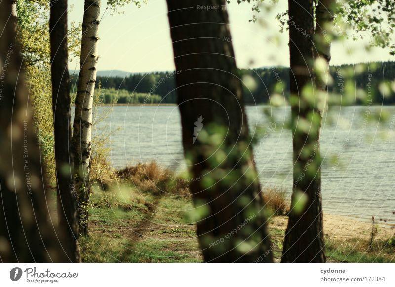 Am See Natur Wasser schön Baum Sommer ruhig Wald Ferne Erholung Umwelt Landschaft Leben Gefühle Freiheit Gras Glück