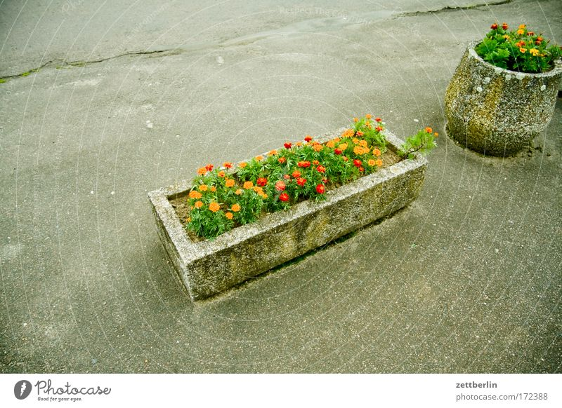 Blumenpracht Blume Pflanze Sommer Ferien & Urlaub & Reisen Blüte Park Beton Asphalt Duft Balkon Parkplatz Blütenknospen Blumenwiese Hippie Blumentopf Grünpflanze