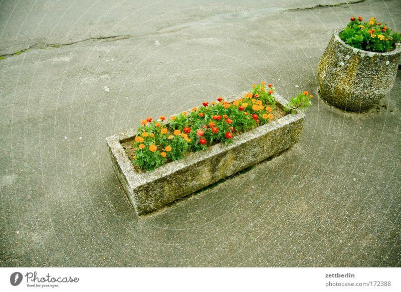 Blumenpracht Pflanze Sommer Ferien & Urlaub & Reisen Blüte Park Beton Asphalt Duft Balkon Parkplatz Blütenknospen Blumenwiese Hippie Blumentopf Grünpflanze