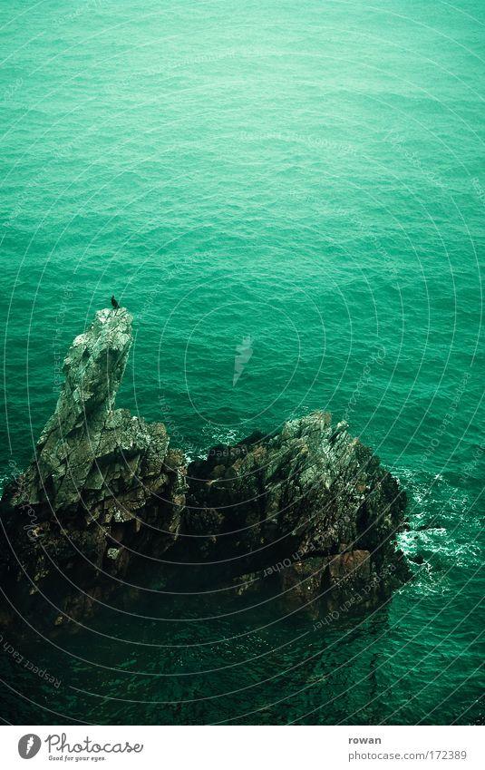 ruhepunkt Meer grün ruhig Einsamkeit dunkel Vogel Küste warten Felsen sitzen Insel Aussicht beobachten einzigartig Spitze Gelassenheit