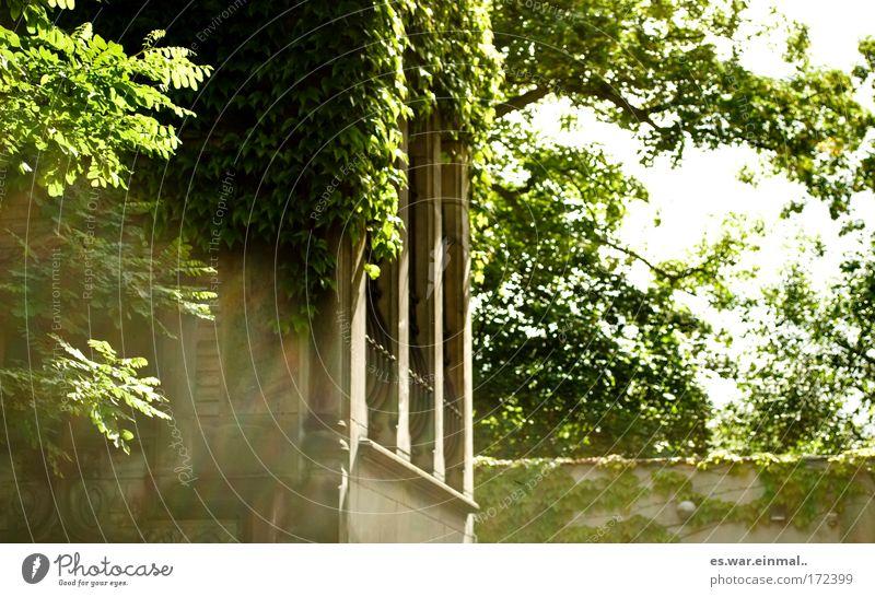 zimmer der prinzessin. alt Baum Pflanze Blatt Haus Garten Stein Mauer Gebäude Raum Wachstum Turm geheimnisvoll Burg oder Schloss Altbau Efeu
