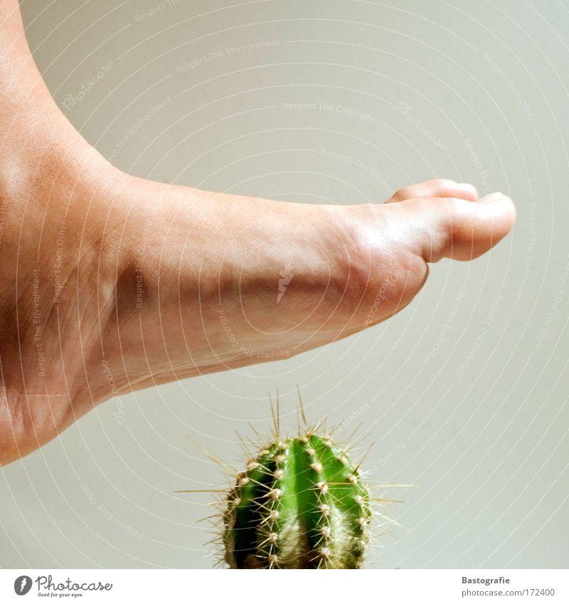 AUTSCH ! Pflanze Gefühle Fuß Beine Angst bedrohlich Schmerz Desaster Zehen Vorsicht schreiten Kaktus Stachel stachelig stechen Wunde