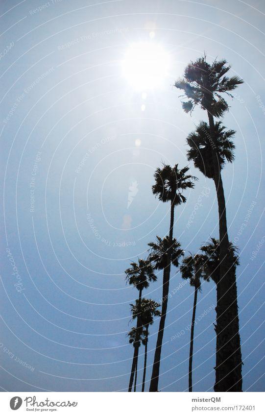 Sunny Days. Ferien & Urlaub & Reisen schön Sonne Sommer Freude Erholung Wärme Sand Wetter Reisefotografie modern Perspektive Schönes Wetter USA Sommerurlaub