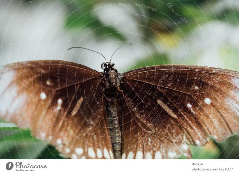 Alter Falter Umwelt Natur Tier Schmetterling Flügel Insekt 1 natürlich Leichtigkeit filigran Farbfoto Nahaufnahme Detailaufnahme Makroaufnahme Menschenleer Tag