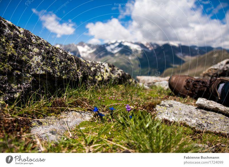 Enzian in Sicht Freiheit Sommerurlaub Schnee Berge u. Gebirge wandern Fuß Landschaft Pflanze Himmel Wolken Sonnenlicht Schönes Wetter Blume Gras Blüte