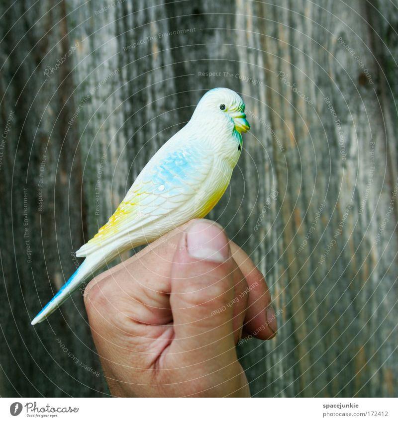 Vogelperspektive Hand Tier Spielen Vogel Finger Sicherheit beobachten Vertrauen Neugier Statue niedlich Geborgenheit Haustier Zusammenhalt Tierliebe