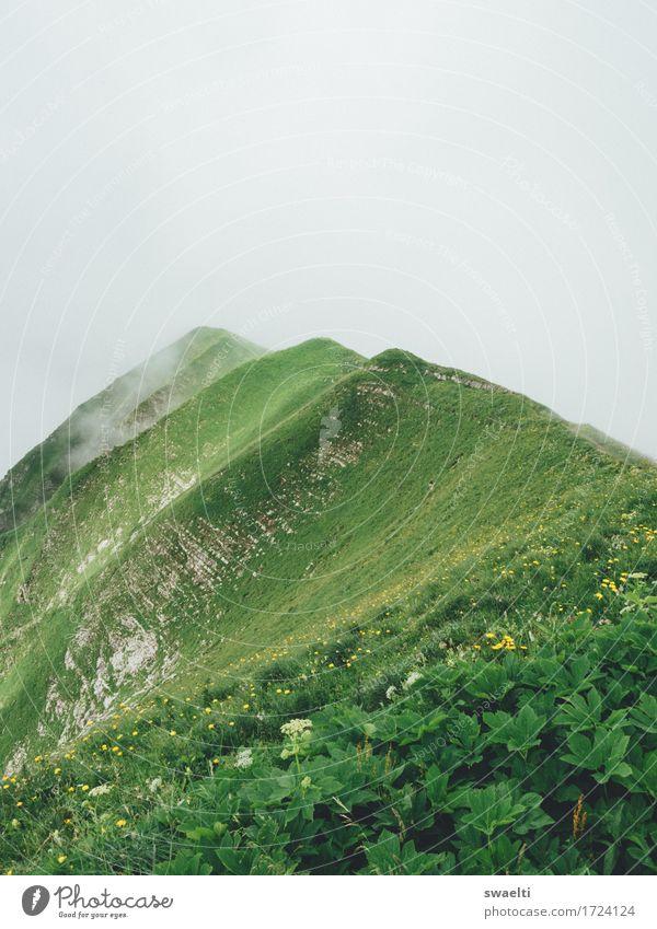Hidden Summit Natur grün Landschaft Einsamkeit Wolken Ferne Berge u. Gebirge kalt Gras grau Stimmung Freizeit & Hobby Wetter Nebel Ausflug wandern