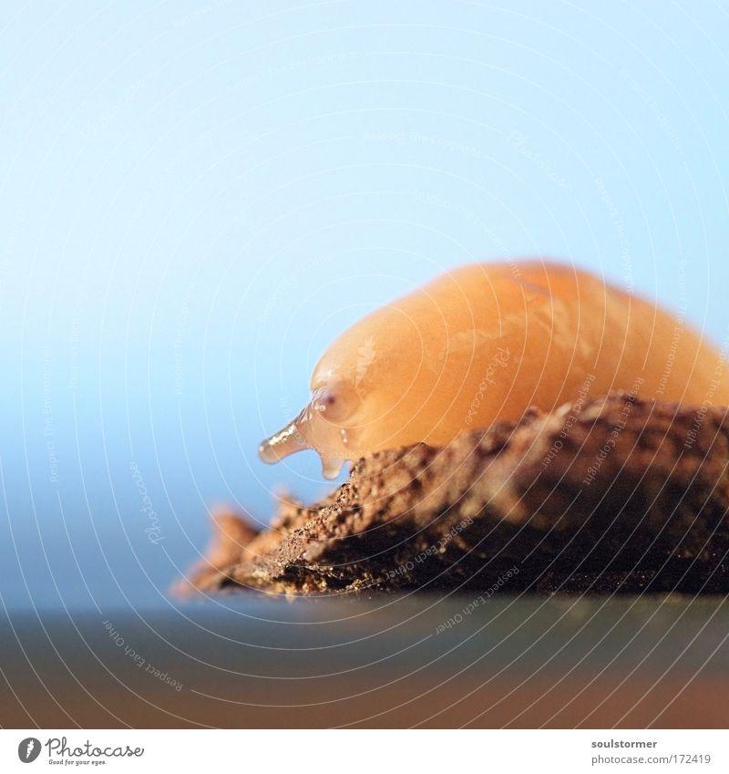 Schneckchen Natur Himmel Auge Tier Holz klein Erde sitzen Tiergesicht einzigartig Aquarium Schnecke langsam Raupe schleimig Nutztier