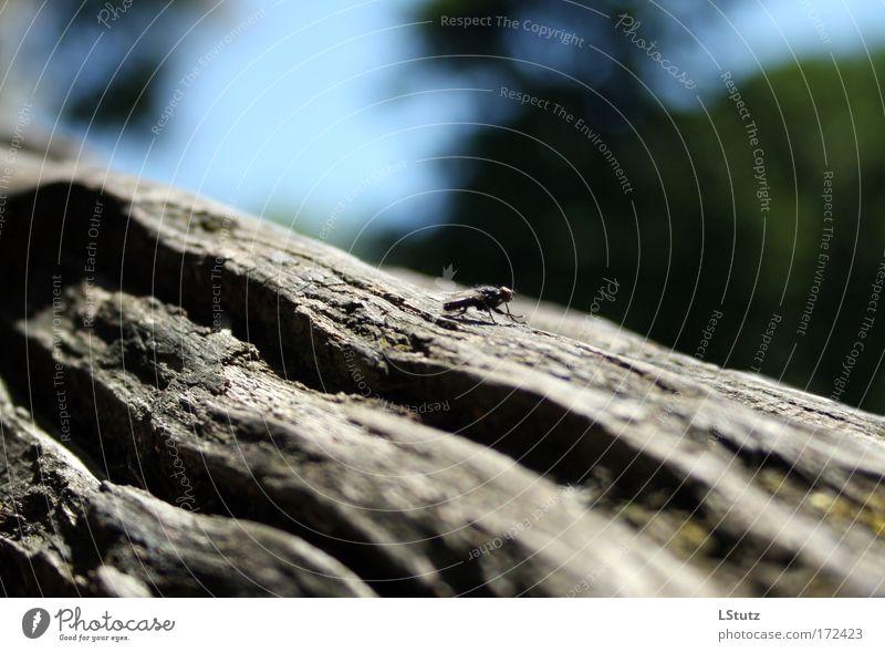 fliege(nde schärfentiefe) Natur blau grün Sommer Baum Tier ruhig schwarz grau sitzen Fliege ästhetisch Baumstamm krabbeln Tiefenschärfe Baumrinde