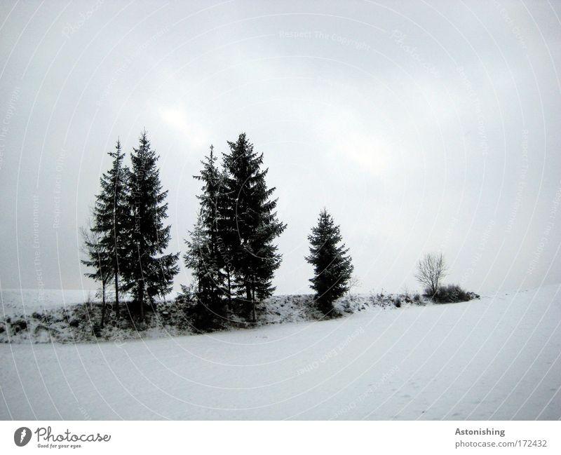Gänsemarsch Natur Wasser Himmel weiß Baum blau Pflanze Winter schwarz Wolken kalt Schnee Wiese Gras Landschaft Luft