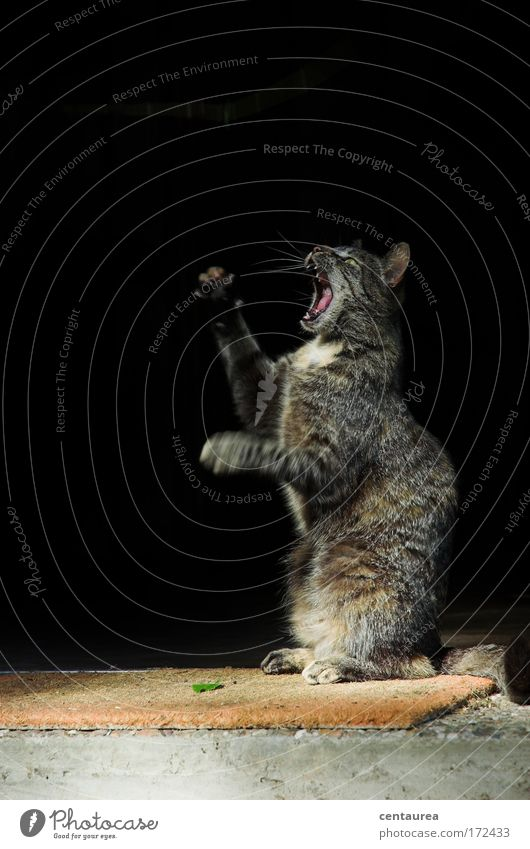 Jagdfieber Spielen Freiheit Häusliches Leben Natur Sonnenlicht Tier Haustier Wildtier Katze 1 Bewegung fangen Aggression authentisch bedrohlich elegant frech