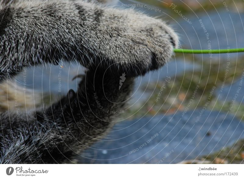 Zum Greifen nah Katze weiß grün Freude Tier schwarz Wiese Spielen Bewegung grau sitzen elegant wild liegen Geschwindigkeit Fröhlichkeit