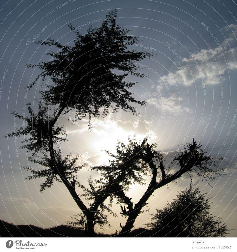 Exot Himmel Baum Pflanze Ferien & Urlaub & Reisen Blatt Wolken Einsamkeit Ferne Landschaft Zufriedenheit Umwelt groß Ausflug Wachstum Tourismus Sträucher