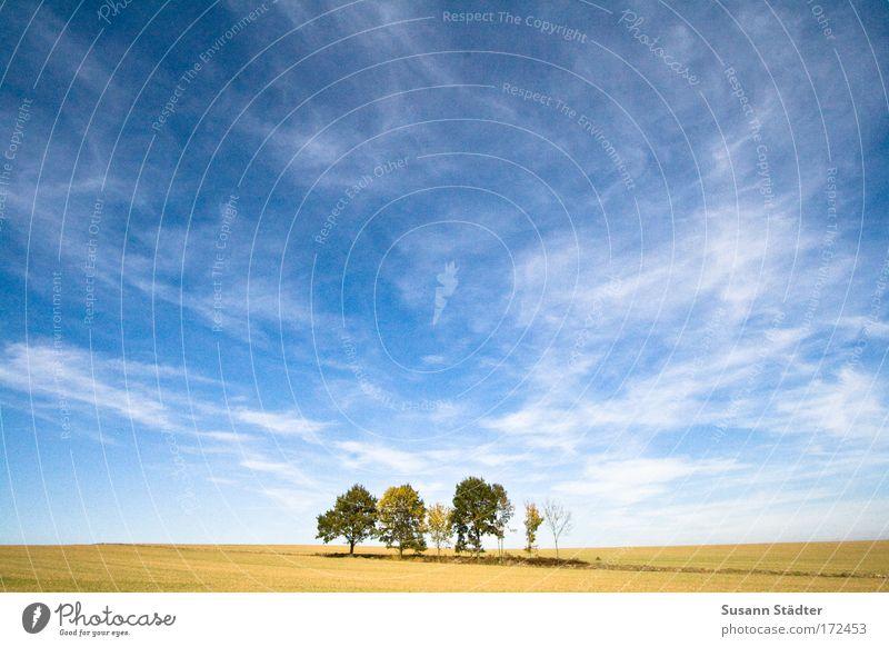 Regenwald Himmel Pflanze Sommer Sonne Baum Erholung Wolken Blatt Tier Wärme Feld Erde Klima groß Hügel Landwirtschaft