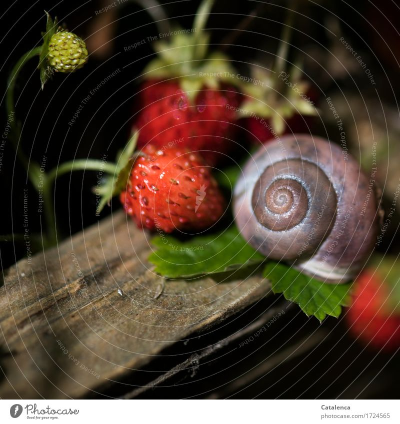 Gut platziert Pflanze Sommer grün rot Tier Holz Garten braun rosa liegen Wachstum nah Duft nachhaltig Fressen Schnecke