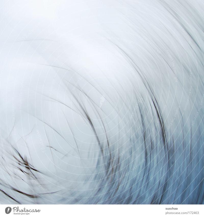 im auge des sturms .. Natur blau Winter grau Linie abstrakt rund Ast Sturm trüb Naturphänomene Naturgewalt