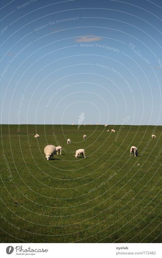 Cheap Natur Himmel Sommer Ferien & Urlaub & Reisen ruhig Einsamkeit Tier Erholung Wiese Gras Freiheit Landschaft Feld Küste Wetter Umwelt