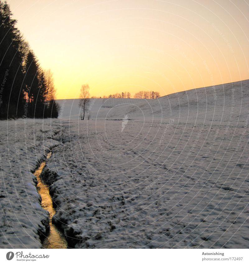 warme Winterlandschaft Umwelt Natur Landschaft Wasser Himmel Wolkenloser Himmel Wetter Schönes Wetter Schnee Baum Sträucher Wiese hell kalt schön