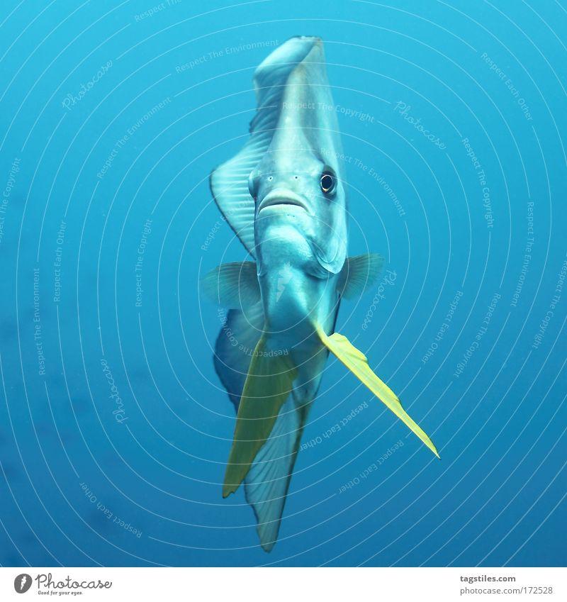 BIS IN DIE NASENLÖCHER Unterwasseraufnahme Natur Wasser schön blau Sommer Meer Ferien & Urlaub & Reisen Erholung Abenteuer Nase Fisch Reisefotografie tauchen