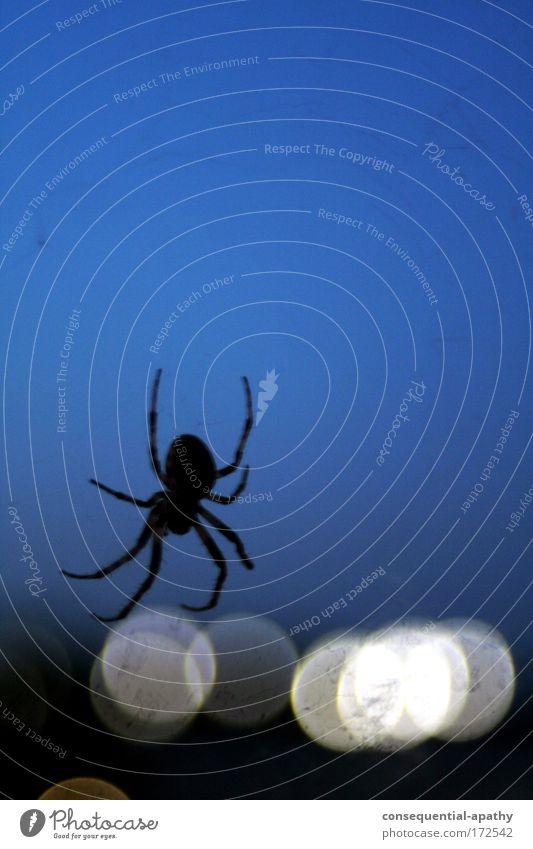urban network... blau weiß Tier schwarz Stimmung Netzwerk Netz hängen Spinne krabbeln Nachthimmel stachelig