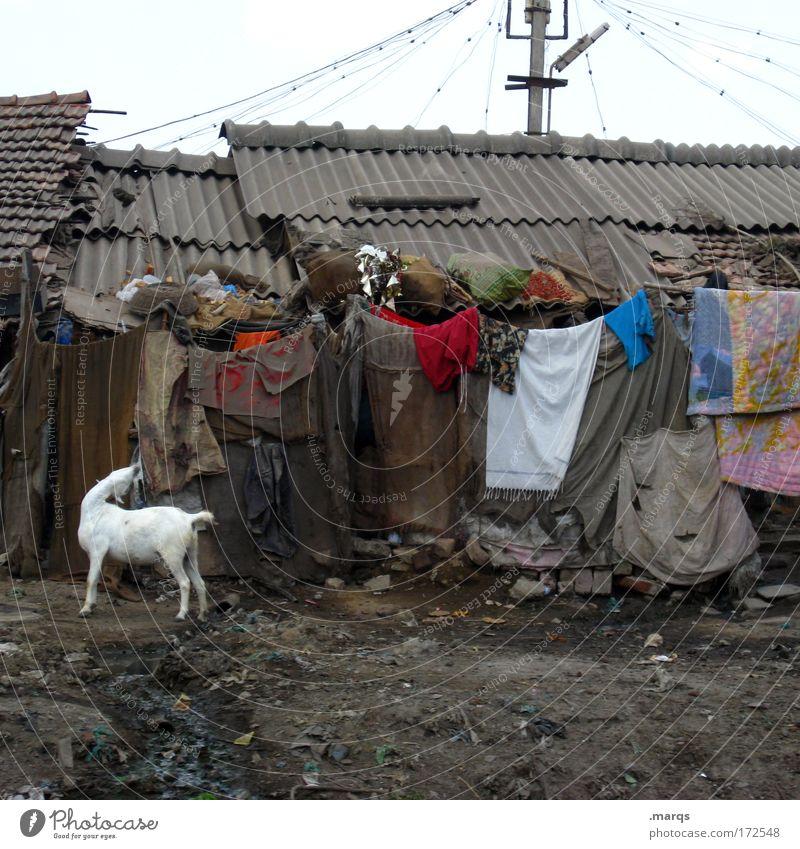 Slum Stadt Tier Ferne Traurigkeit Angst dreckig Wohnung Armut Umwelt trist kaputt Häusliches Leben einzigartig außergewöhnlich Schmerz Verfall