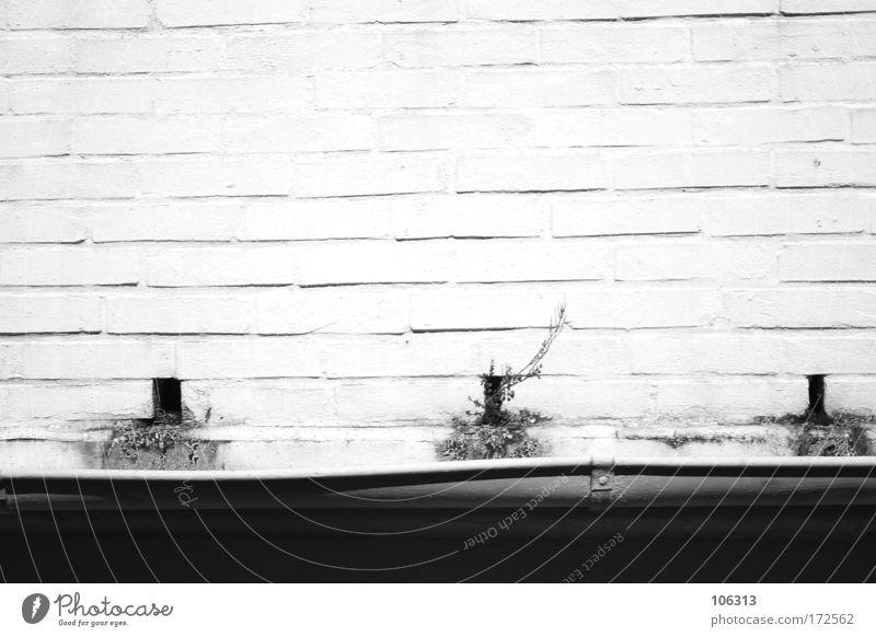 Fotonummer 128148 alt Haus Leben Wand Stein Mauer Linie Treppe 3 leer trist Dach Bauwerk Risiko Fuge Neigung