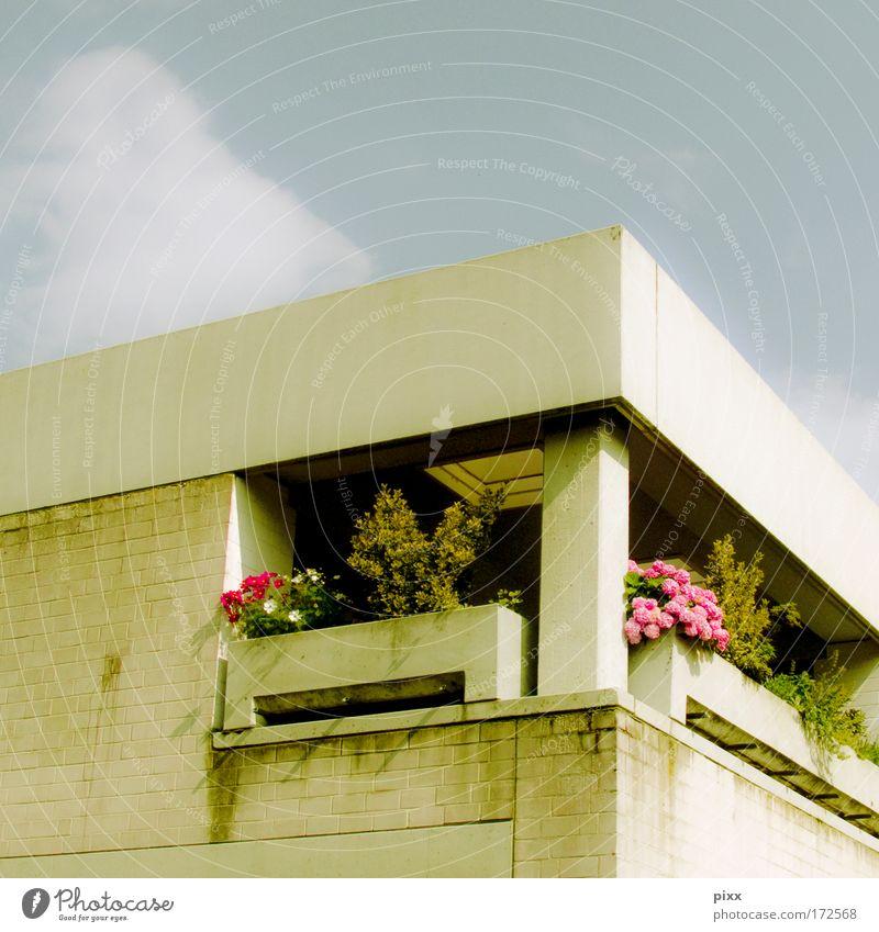 colourlovers [Usertreffen Bo] Farbfoto Außenaufnahme Menschenleer Sommer Wohnung Schönes Wetter Pflanze Blume Architektur Balkon ruhig Heimweh Neid einzigartig