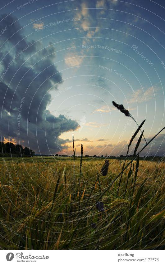 Vor dem Sturm III Farbfoto Außenaufnahme Menschenleer Textfreiraum oben Abend Dämmerung Licht Schatten Sonnenlicht Sonnenstrahlen Sonnenaufgang Sonnenuntergang