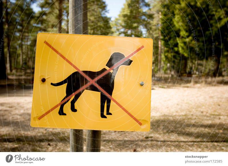 Wald Hund Park Zeichen Haustier negativ Mark gekreuzt begrenzen restriktiv
