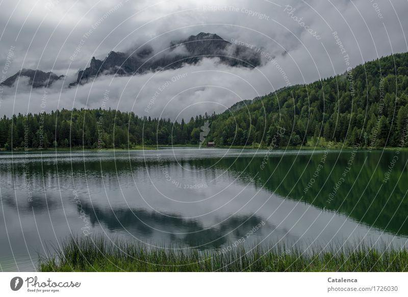 Morgens Natur Pflanze Sommer grün Wasser weiß Baum Landschaft Wald Berge u. Gebirge grau Schwimmen & Baden See Stimmung Tourismus Freizeit & Hobby