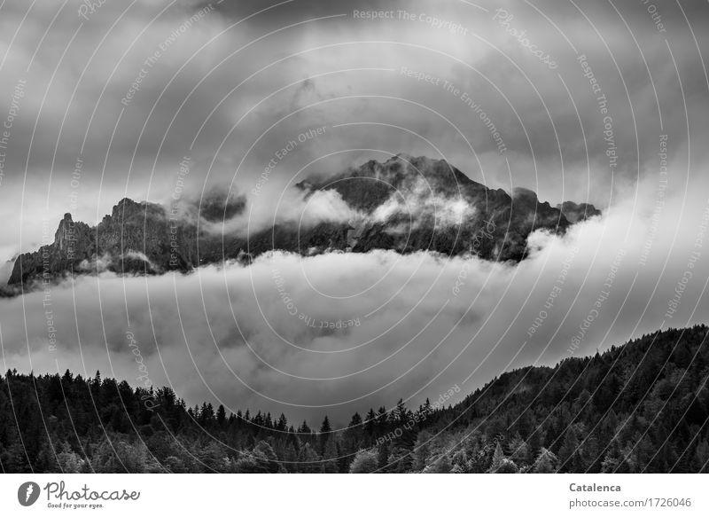 Hoffnung auf Sonne Natur Pflanze Sommer weiß Baum Landschaft Einsamkeit Wolken Berge u. Gebirge schwarz grau Stimmung Tourismus wandern Ausflug hoch