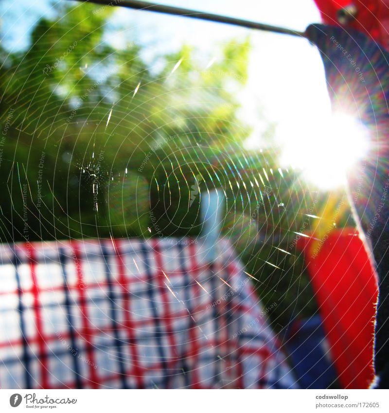 cobweb theorem Garten Hemd Wäsche trocknen Wäscheleine Wäscheklammern dehydrieren Waschtag Spinngewebe