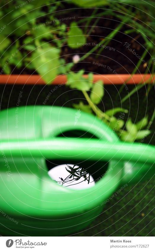 Kleingarten Sommer Garten Freizeit & Hobby Kräuter & Gewürze Duft Balkon Gartenarbeit Lavendel Gießkanne Nutzpflanze Kunstrasen Zitronenmelisse