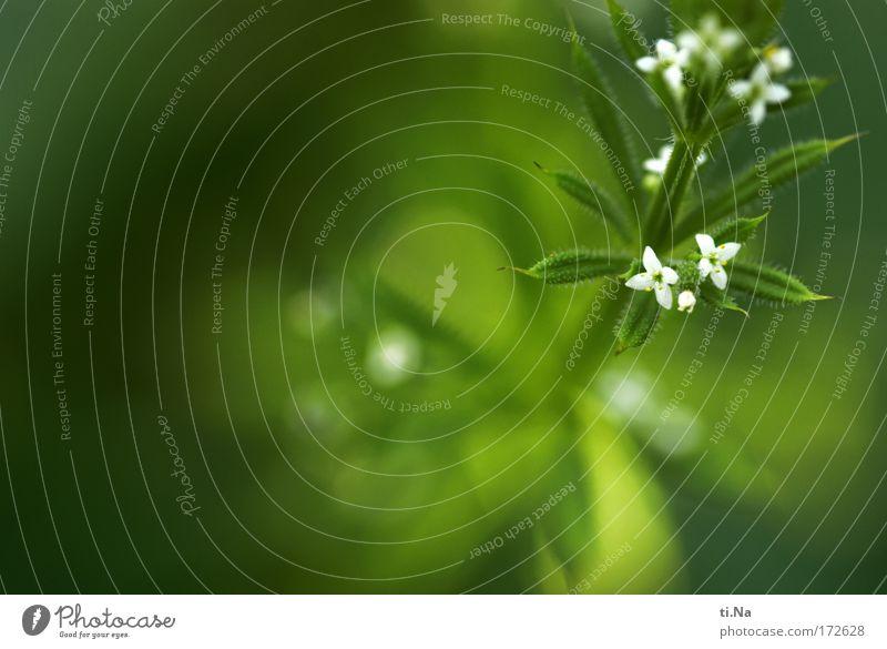 ich kleb an Dir wie eine Klette Farbfoto Außenaufnahme Textfreiraum links Schwache Tiefenschärfe Heilpraktiker Umwelt Natur Landschaft Tier Sommer Pflanze Blüte