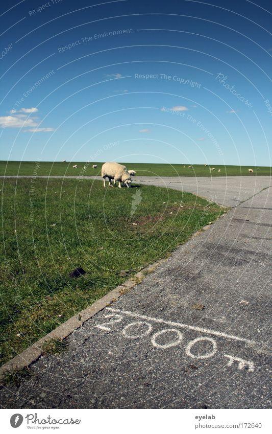 2000 mäh Natur Himmel Sonne Sommer Ferien & Urlaub & Reisen ruhig Wolken Einsamkeit Tier Erholung Wiese Gras Freiheit Landschaft Feld Küste