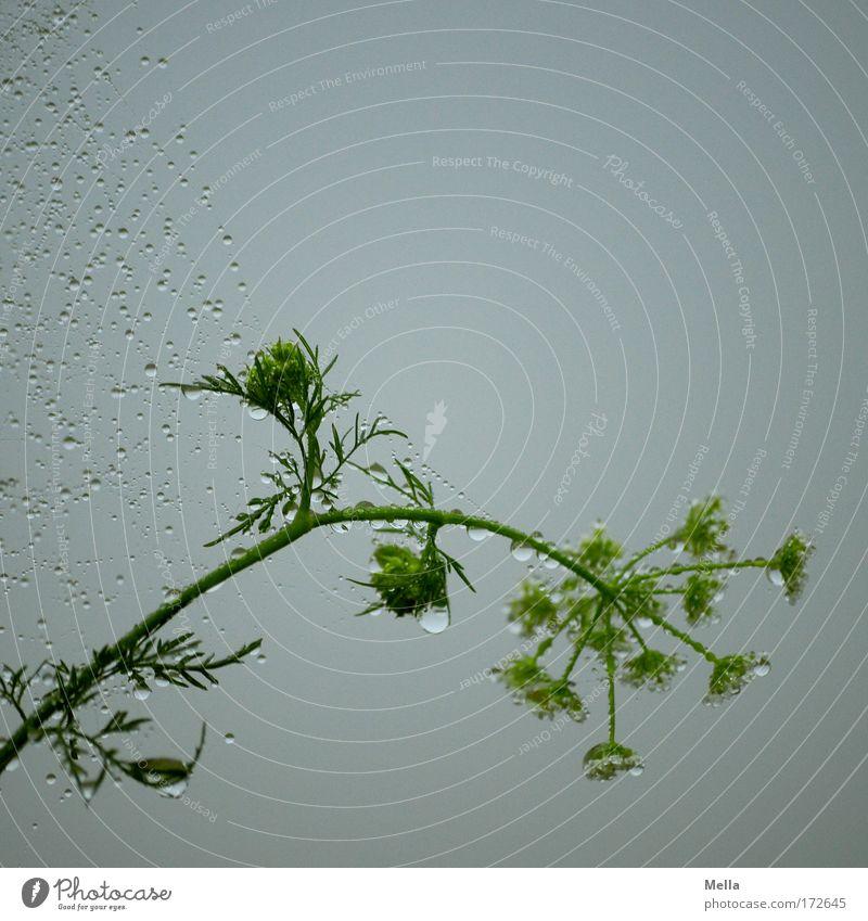 Starke Bande Natur Himmel Blume grün Pflanze Sommer ruhig Wiese Frühling grau Traurigkeit Regen Nebel Umwelt Wassertropfen nass