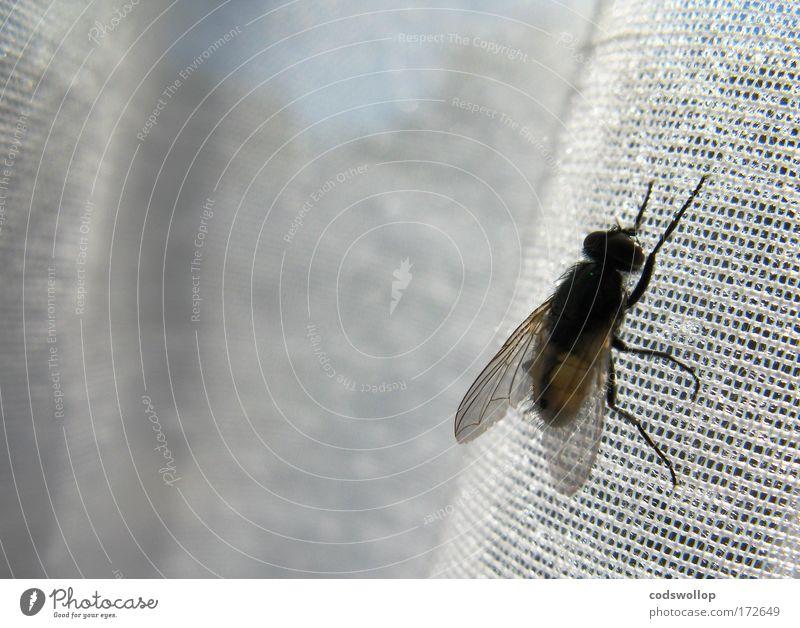 521. Suchergebniss für 'fliege' Natur Tier Erholung Fenster Fliege Küche Insekt festhalten Langeweile Gardine Parasit
