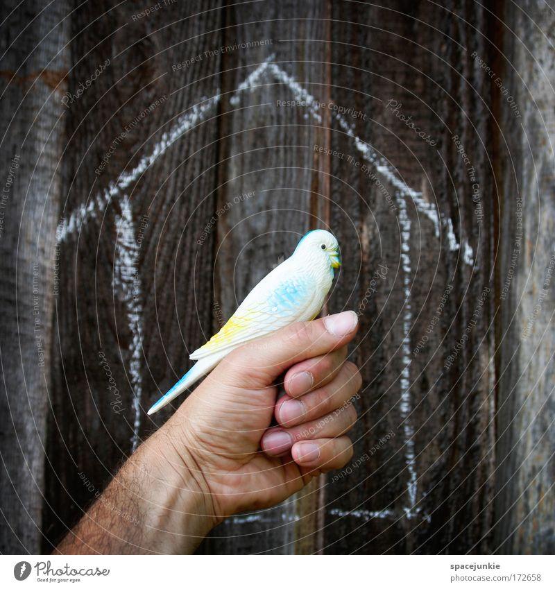 Sweet home Hand Haus Tier Vogel Wohnung Finger verrückt Kitsch Schutz Vertrauen Spielzeug Zoo Gelassenheit Geborgenheit Haustier Zusammenhalt