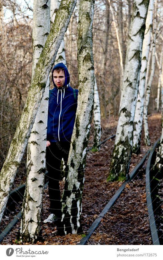 Birch trees Gleise Mensch Junger Mann Jugendliche 1 18-30 Jahre Erwachsene Natur Erde Herbst Baum Birkenwald Wald Jacke Kapuze Neugier blau braun schwarz weiß