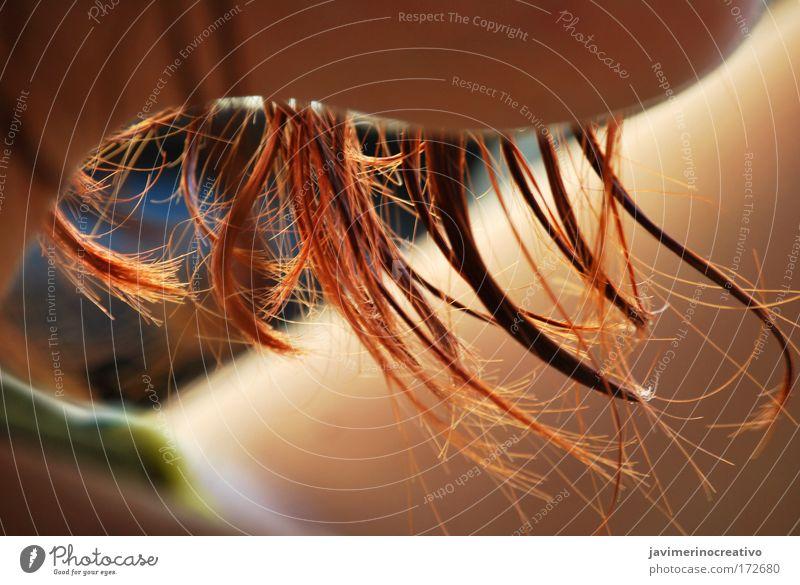 schön rot Sonne Sommer Haare & Frisuren Haut Behaarung genießen Künstler